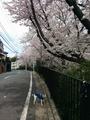 1404桜散歩 (4).jpg