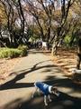 1411カーボン山 (3).jpg