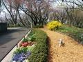 1504桜山 (2).jpg