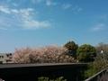 1504桜山 (3).jpg