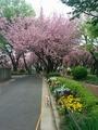 桜山160417 (1).jpg